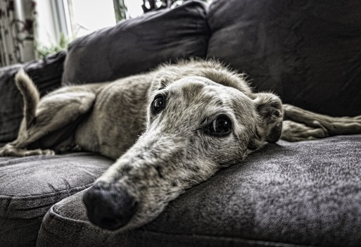 How to protect your sofa from pets LaZBoy UK
